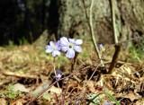 Wiosna 2012 na Podlasiu (zdjęcia)