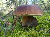 Letni wysyp grzybów w lasach na nizinach. Wreszcie! [LOKALIZACJE, MIEJSCÓWKI]