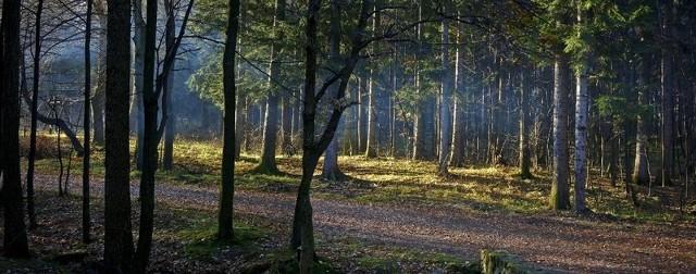 Trzech mężczyzn uprawiało seks z dziewczynką w lesie.