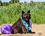 Psy do adopcji ze schroniska w Radomiu. Obejrzyj je na zdjęciach ze specjalnej letniej sesji. Może któryś pies skradnie twoje serce