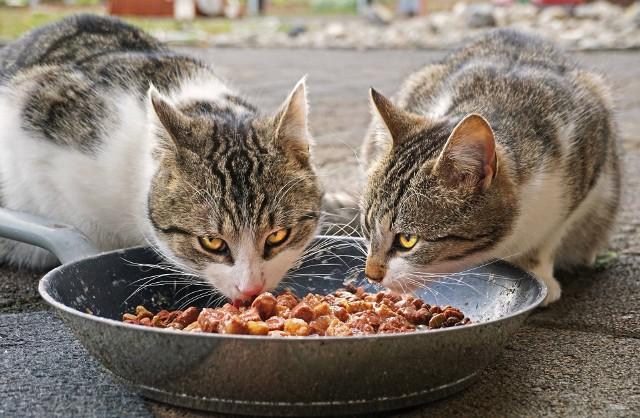 Zarówno te malutkie, jak i bardzo dojrzale. Małe i duże. 500 kotów z Opola i okolic potrzebuje wsparcia ludzi dobrej woli w postaci karmy.