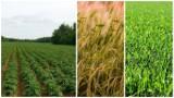 Powierzchnia Polski to 31,3 mln ha. Ile zajmują gospodarstwa rolne?