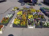 Na krakowskich placach targowych pojawiły się już sadzonki kwiatów, warzyw i ziół [ZDJĘCIA]