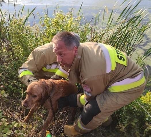 Dwa psy zostały uratowane dzięki pomocy druhów z OSP Kijewo Królewskie