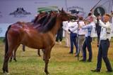 NIK o stadninach koni: Coraz gorsze wyniki finansowe, czterech prezesów przez dwa lata. Stadnina w Janowie Podlaskim źle gospodarowana