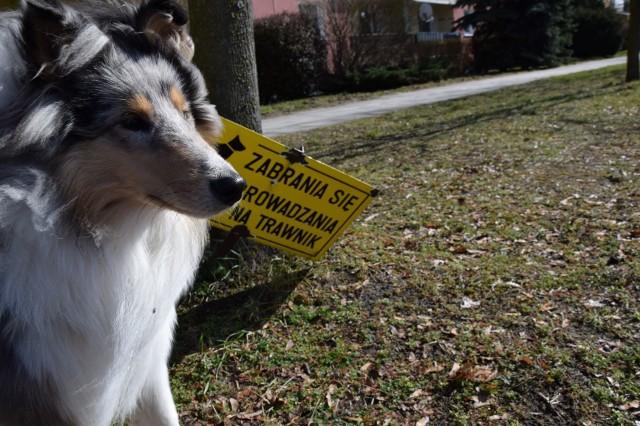 Psie odchody pojawiają się na chodnikach i trawnikach. Rozwiązaniem problemu, według niektórych wspólnot mieszkaniowych są tabliczki z zakazami.