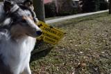 Psie kupy na trawnikach i chodnikach w Nowej Soli. Mieszkańcy zastanawiają się, jak można rozwiązać ten problem. Czy tabliczka starczy?
