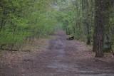 Kontrowersyjny projekt nowelizacji ustawy o lasach. PO krytykuje, a lata temu mieli podobny