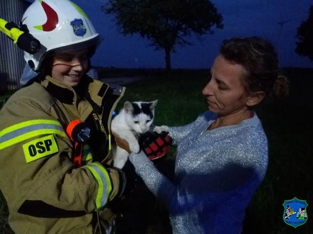 Strażacy pomogli kotu dostać się z powrotem na ziemię