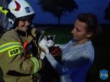 Tak wyglądała akcja, podczas której strażacy uratowali kota. Zobaczcie zdjęcia