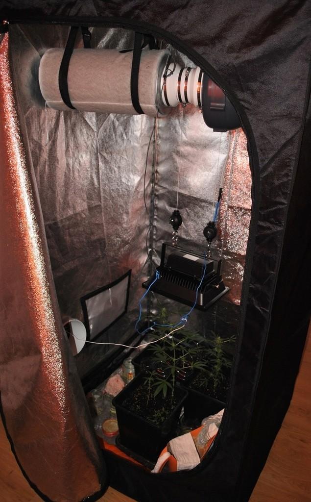 W szafie 34-latek przechowywał sprzęt do uprawy marihuany.
