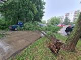 Burze przechodzą nad Kujawsko-Pomorskiem. W Toruniu powalone drzewa, zalany parking i piwnice