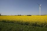 Europa wykorzystuje wiatraki do produkcji energii, Polska z nimi walczy. Do czego to doprowadzi?