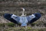 We Wrocławiu już ponad 200 gatunków ptaków. Przybywa tych ciepłolubnych. Znacie je wszystkie?