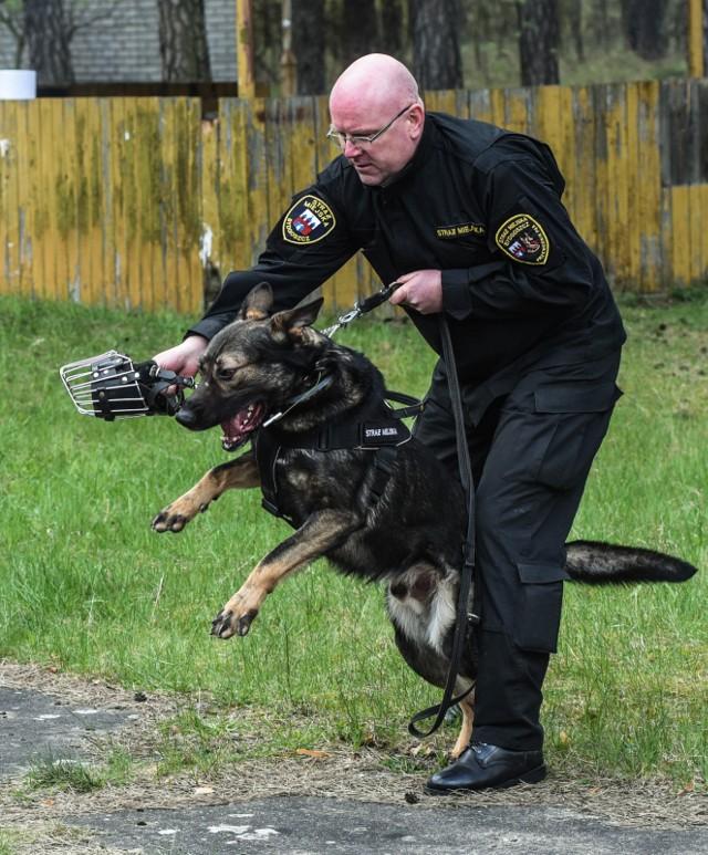 Pierwsze miejsce zajęli: Leopold Zych z psem Kastor.