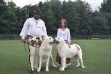 Psy rządzą w Kamieniu. Ponad 200 ras i 2000 czworonogów na II Międzynarodowej Wystawie Psów Rasowych. Są też wielbiciele piesków