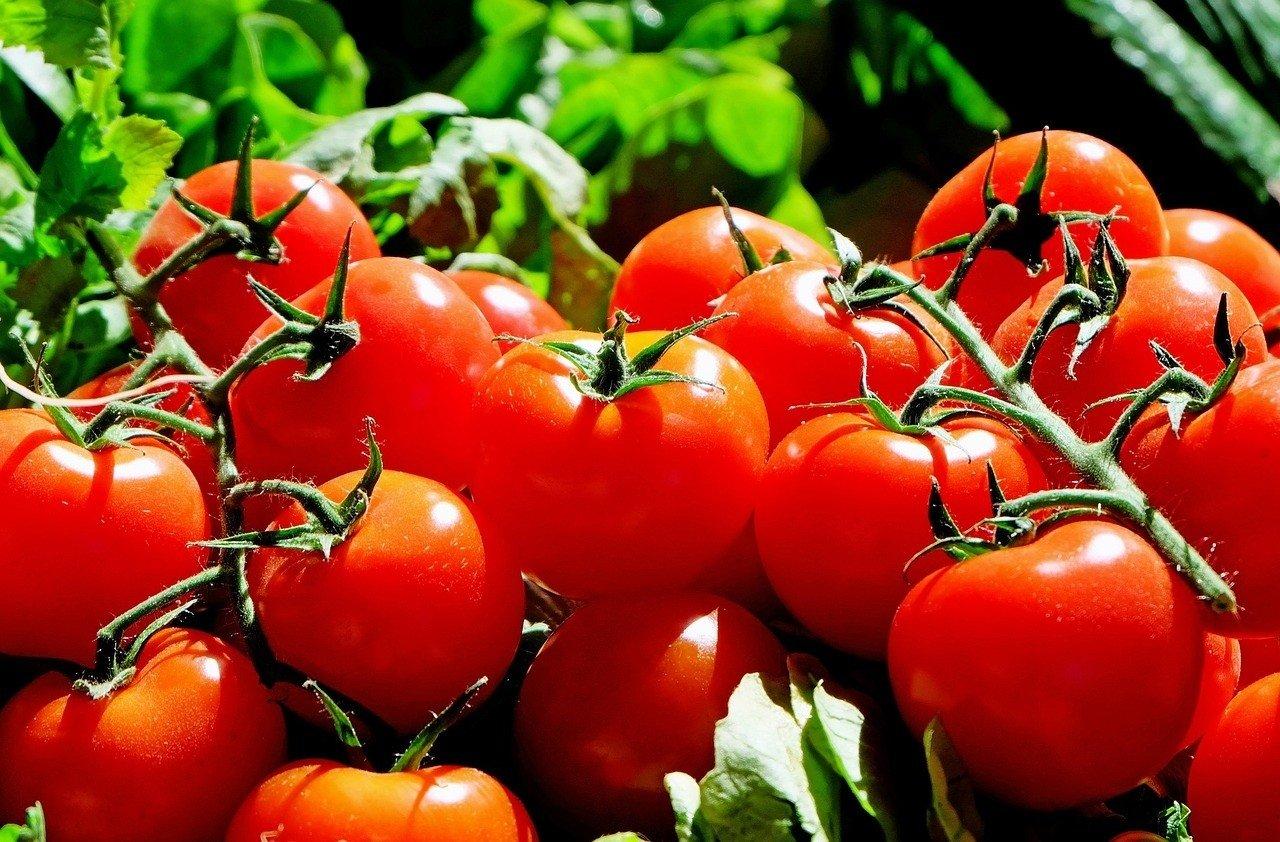 Pomidorowa Kuchnia Jana Kuronia Wideo Gazeta Lubuska