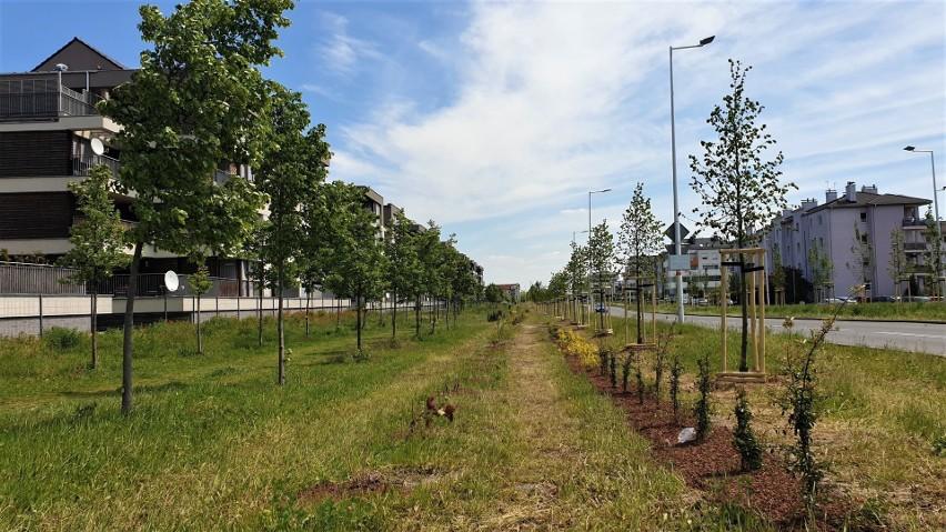Nowe nasadzenia zieleni na terenie Opola będą realizowane na początku przyszłego roku