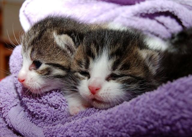 Kocięta wyrzucone do śmietnika w Sławie znalazły opiekę. Kobieta, która je wyrzuciła, usłyszała zarzut znęcania się nad zwierzętami.