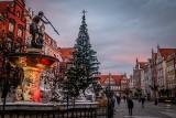 Choinka na Długim Targu w Gdańsku już stoi! Świąteczne iluminacje pojawiły się także przy Forum Gdańsk