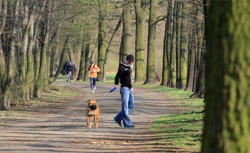 Ścieżki spacerowe, biegowe i rowerowe nad Odrą. Szczególnie...