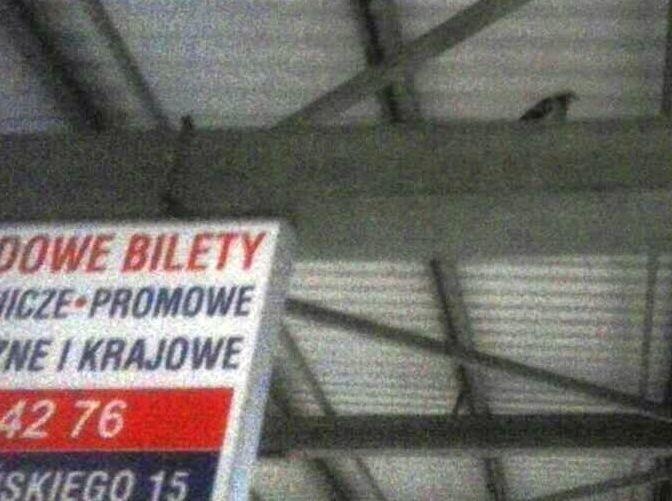 Gołębie i ich odchody na dworcu PKS w Radomiu. Interwencja czytelnika