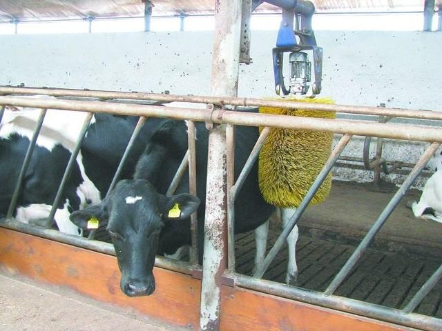 Rolnictwo. Z mleczarstwem nie będzie tak źle.Komisja Europejska zapewnia, że produkcja mleka nadal będzie się opłacać. Nie należy obawiać się rozregulowania rynku, bo zapotrzebowanie na mleko na rynkach światowych znacznie wzrośnie.