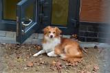 Żaden pies z Ciapkowa nie spędzi już zimy na zewnątrz. Gdynia oddała do użytku kolejny pawilon dla psów [zdjęcia]