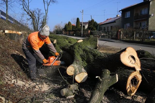 PKP wycinają prawie 900 drzew w Piotrkowie i powiecie