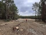Dąbrowa Górnicza. Wycinają las wokół Pustyni Błędowskiej? To przygotowania do budowy nowego szlaku. Ma być gotowy na początku 2022 roku