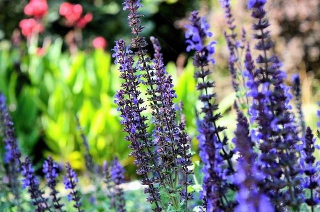 Miłośnicy pięknych i zadbanych ogrodów wiedzą, w którym miejscu można nabyć najlepszą ziemię do kwiatów lub nasiona. Dla tych, którzy dopiero rozpoczynają swoją przygodę z ogrodnictwem mamy niespodziankę – zbiór polecanych przez lublinian najpopularniejszych centr ogrodniczych.