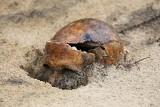 Ślady zbrodni komunistycznych. IPN wykopał ludzkie szczątki przy Wysockiego w Białymstoku (zdjęcia)