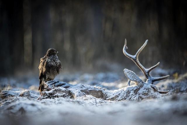 """Zdjęcie pt. """"Strażnik"""" Łukasza Gwiździela znalazło się wśród stu najlepszych zdjęć z całego świata w kategorii Wildlife 6. edycji Międzynarodowego Konkursu Fotograficznego 35Awards"""