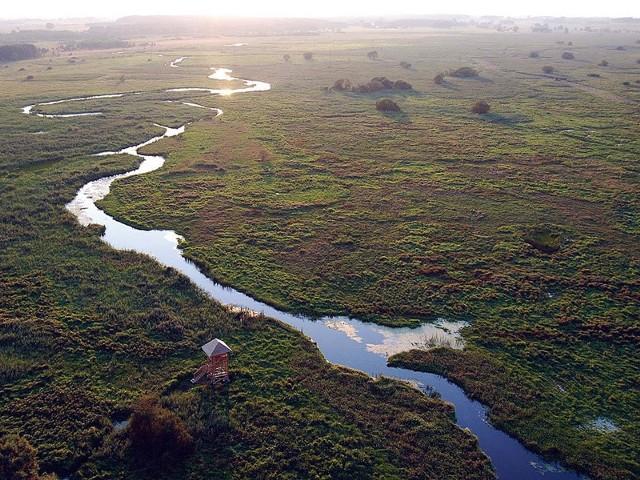 Rzeka Narew z lotu ptaka