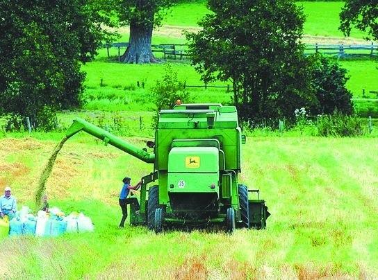 Podlascy rolnicy stracili finansowo. Żniw nie zaliczą do bardzo udanych.Kto zdążył skosić zboże przed deszczami, nie ma powodów aby narzekać. Ziarno, które zostało zebrane później ma gorsze parametry.
