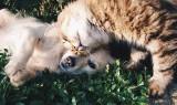 UWAGA! Trujące rośliny dla psa. Rośliny trujące dla kota! Najbardziej trujące rośliny w Polsce dla psów i kotów! 24.07.2021