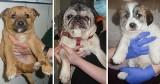 Toruń. Psy do adopcji. Te zwierzęta czekają w schronisku na nowy dom