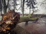 Podmuch wiatru wyrwał drzewo z korzeniami. Mieszkańcy Templewa zostali odcięci od cmentarza