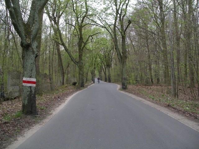 Prawdopodobnie w nocy z 26/27 kwietnia skradziono większość odblaskowych opasek z kasztanowców, które rosną wzdłuż ulicy Biskupińskiej w Poznaniu.