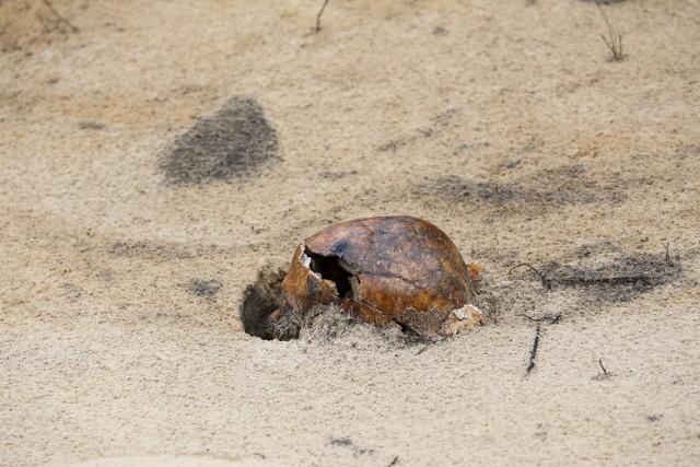 IPN zaczął ich szukać w sierpniu 2016 roku. Wtedy w okolicach ul. Wysockiego znaleziono pięć jam grobowych.
