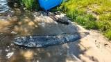 Rekordowy połów nad Zalewem Zemborzyckim. Wędkarze złowili ponad 2-metrowego suma