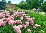 Arboretum w parku dzikowskim w Tarnobrzegu. Wyjątkowe miejsce na spacer (ZDJĘCIA)