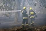 Ostrzeżenie o zagrożeniu pożarowym w lasach. Zostaną zamknięte?