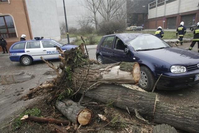 Powalone drzewo upadło na samochód - zdjęcie ilustracyjne