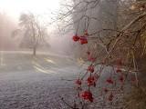 Jaka pogoda w nadchodzący weekend: Czeka nas ochłodzenie czy będzie ciepło i słonecznie? A może spadnie śnieg? Sprawdź!