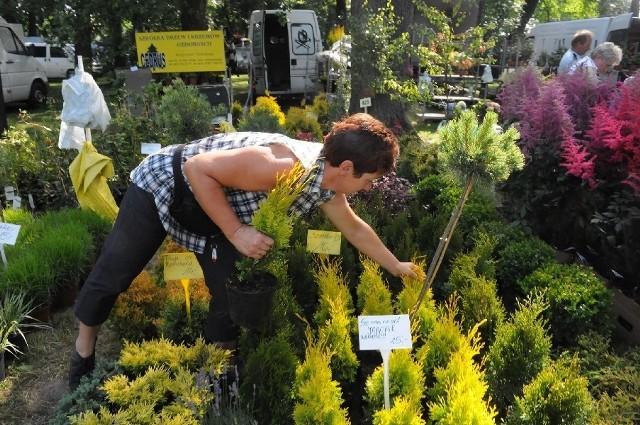 Kiermasz ogrodniczy w KalskuNa targach jest w czym wybierać. Oprócz popularnych odmian można dostać też nowości.
