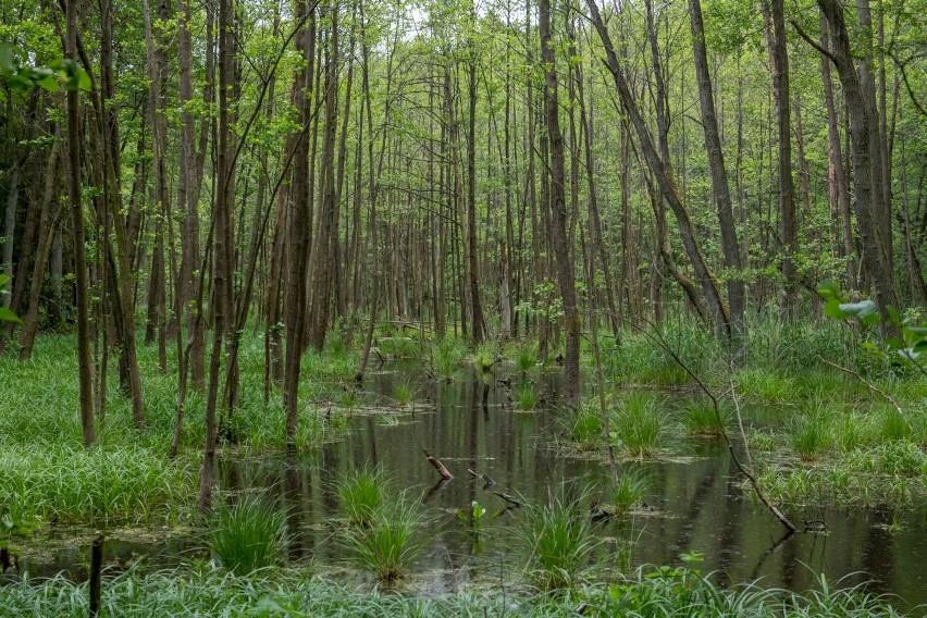 Chodzi głównie o pozyskanie drewna tzw....