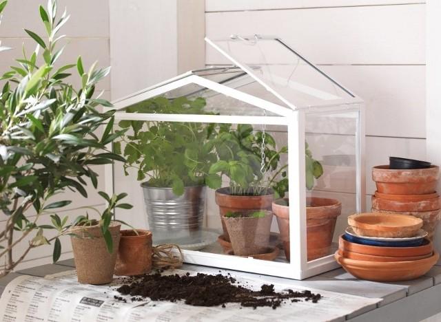 Szklarenka do domowej uprawy ziółAby cieszyć się smakiem i zapachem świeżych ziół przez cały rok, możemy założyć miniaturową domową szklarnię.