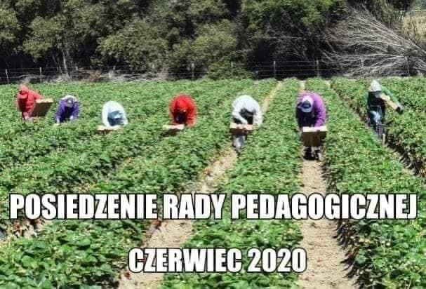 Zobacz najlepsze memy nawiązujące do słów ministra Ardanowskiego.