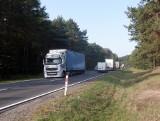Droga ekspresowa S10 Bydgoszcz – Toruń kontra las i jego mieszkańcy
